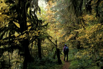 Photo: Hiker on a foot path in Wilamette Nat'l Forest (old growth)in Oregon.