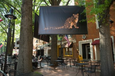 Photo: Images from the Photo Ark are hung up around Charlottesville, Virginia, home to the Look3 Photo Festival.