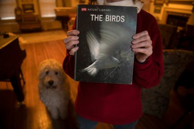 Photo: Time Life Book on the The Birds, 1968.