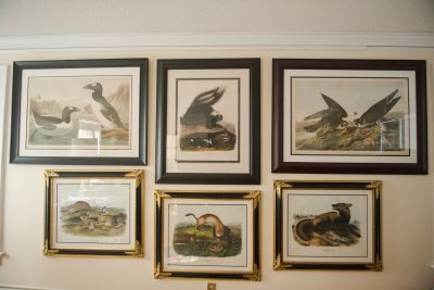 Photo: Audubon framed pieces in the home of Joel Sartore.