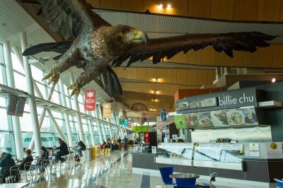Photo: A large sculpture of a raptor at the airport in Wellington, New Zealand.