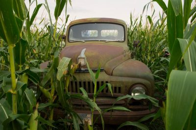 Photo: An old International Harvester truck in a cornfield.