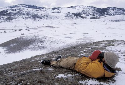 Photo: A worker uses binoculars to track wild gray wolves in Yellowstone National Park.