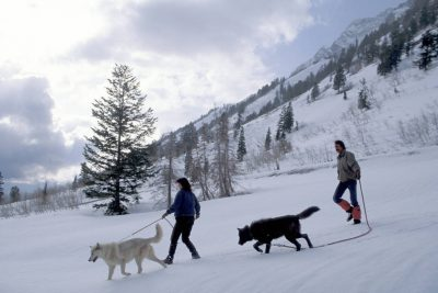 Photo: Two clients of Mission Wolf, a non-profit that adopts wolf-dog hybrids when they become to much for their owners to handle, go for a walk near Salt Lake City, Utah.