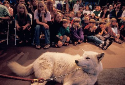 Photo: A client of Mission Wolf, a non-profit that adopts wolf-dog hybrids when they become too much for their owners to handle, during a presentation to school children in Salt Lake City, Utah.
